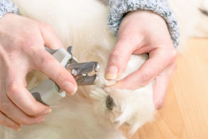 Dog claw