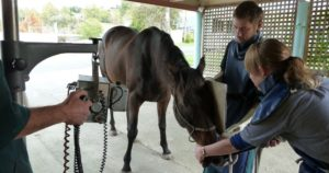 Veterinary Services - Equine x-ray