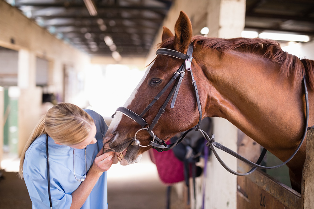 Veterinary Services - Large Animals