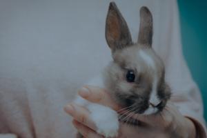 Veterinary Services - Small Animals